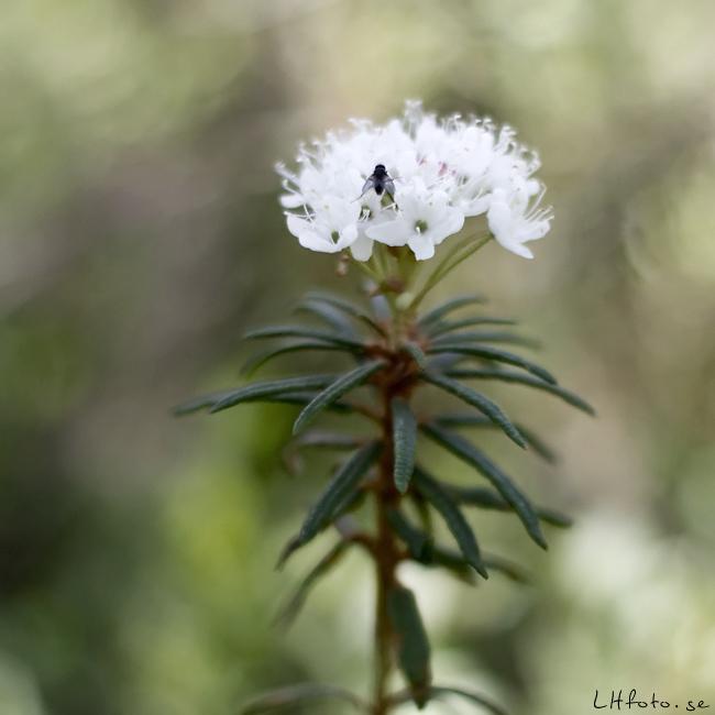 Blomma i skogen